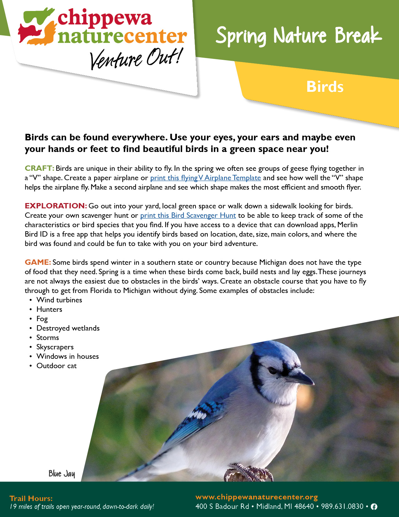 Spring Nature Break - Birds
